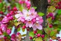Flower Gardens / by Nelda Fox