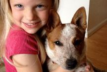 Cattle Dogs Rule Australian Cattle dogs / High quality purebred Australian cattle dog/Queensland/blue heeler puppies. Training, rescue, and AKC  Show dogs. This is a Christian company! Glory to God. Thank you for looking.  We're changing the world one heeler at a time! / by Australian Cattle Dogs Rule