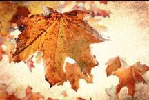 Autumn Softly Whispers / The softer side of fall.... / by Cindi Lou