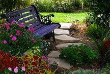 Outdoor / Garden / Landscaping / by Katie L