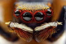 Insect / by Kamil Fatsa
