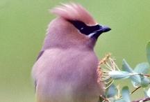 Aves / Es increíble la cantidad de colores y formas  que pueden tener. / by Conchi León