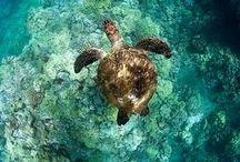 turtles / by Sydney Vegezzi