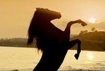 horses / by Sydney Vegezzi
