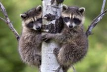 Animals - Small. Awww! / by Carol Spangler