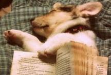 READING / by Nic Tir
