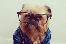 Furry Friends / We know what you're thinking... / by Zenni Optical