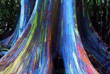 Maui life / Hawaii / by Ashley Beebehiser