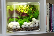 iSPACE - fish tank / by SEDlabs