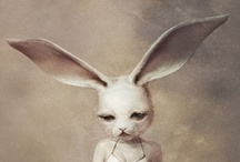 Rabbits everywhere / by Nicole Staf