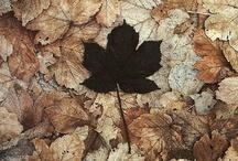 Autumn *  Fall / by Bridgett Jones