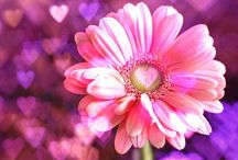 ❀FLOWERS❀ / Lovely flowers / by ♡AI♡ CHANNEL