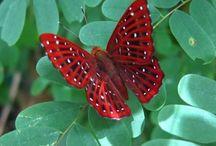 Butterflies n Moths / Butterflies Moths Dragonflies / by Michelle Oliphant