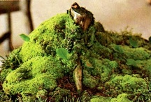 Tiny Kingdoms / A collection of pins concerning Biospheres, Terrariums and Bonsai including photos of my endeavors in all of these areas. / by Phill Burnett