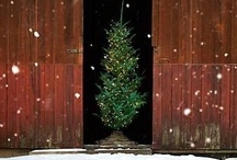 Winter Wonder / From Prim to Elegant....these are some favorite Christmas Ideas / by Phill Burnett