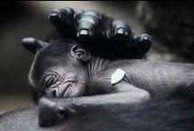 Monkeys / by Denise Silveira