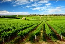 Colorado Wineries & Vineyards / There are more than 90 wineries located on the Colorado Wine Trail.  / by Visit Colorado
