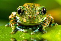 Frogs / by Michele Krieg