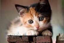 Chats About cats / À propos des chats : images de chats, vie au quotidien, aménagements etc. / by Flanelle Antigone