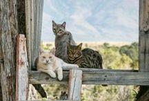 Kitty, Kitty Board 2 / by Sue Lucas