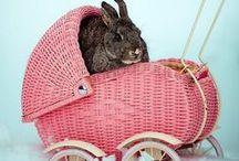 Bunny LOVE! / by Maryann Herkimer