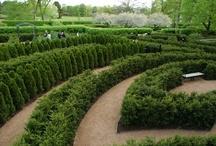 Gardens / The Gardens of The Morton Arboretum, Illinois  #nature #mortonarboretum #garden #Chicago #outdoors #illinois / by Morton Arboretum