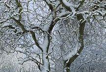 Winter Trees / by Morton Arboretum