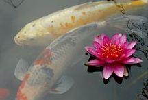 Lotus Power / The deeper in the mud the more beautiful the flower!!! / by Debbie Sanders