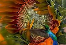 Butterflies ~Hummingbirds~ Fairies / i just love these winged creatures.  With all the colors of flight / by Debbie Sanders