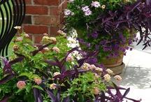 ♪Outdoors & Gardens 2 / by Audrey Merchant