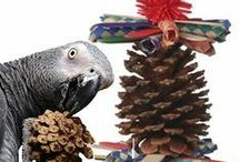 New Products / Find the latest and greatest New Bird Supplies here! / by BirdSupplies.com