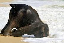 I just loooove animals I do <3 / Animals make my life complete <3 / by Nikki Sheppard