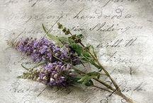 Lavender / by Dóra Sigurbjörnsdóttir