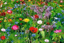 Garden / by Fiona Chung