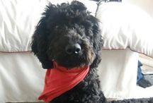 My Puppy / by Rachel Forsyth