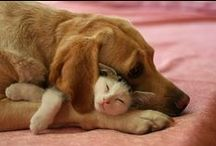 Dogs and Cats / Who said dogs and cats don't get along? The dog with cats on this Board are proof positive that they can be purrrrrfectly compatable.  / by Dog Names and More