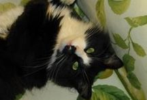 Our Librarians' Cats! / Feline pets of NCL / by New Canaan Library