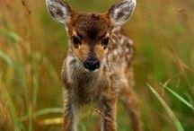 Adorable Animals :) / by Rachel Brandon