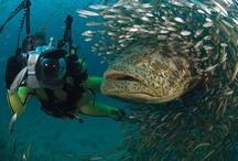 Monster Fish / by Coastal Angler Magazine