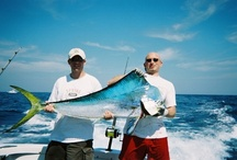 Fishing & Angling / by Coastal Angler Magazine
