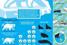 Environmental Infographics / by Beatriz Lucas
