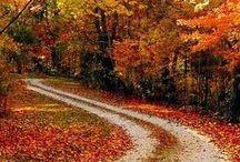 Autumn / by Teresa Williams
