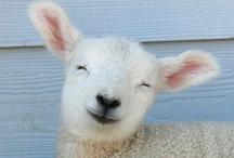 Alpacas & Lhamas & Sheep...Oh, my / by Judi Bonham