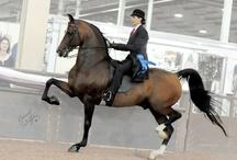 Morgan Horses / by Mary Flint Vandenabeele