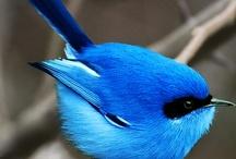 Birdies!!! / by Mary Flint Vandenabeele