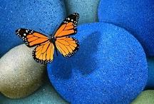 Butterflies R Pretty / by Mary Flint Vandenabeele