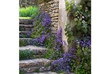 Stoney steps / by Mary Flint Vandenabeele