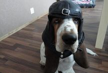 Basset Hounds / by Jessica Farrell Tryon