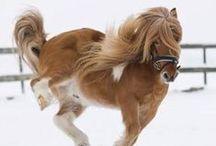 pretty pony / by Ais Harvey