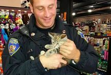 Animal/People Heroes / Heros come in all shapes and sizes!!! / by Linda Rommelaere